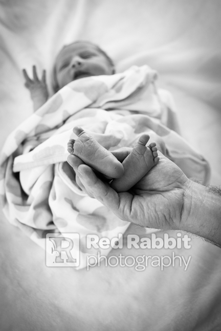 newborn photography somerset